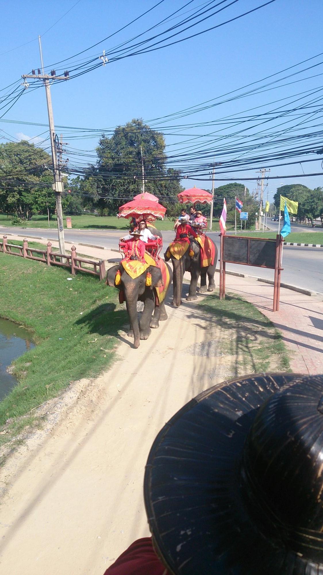 象に乗りました