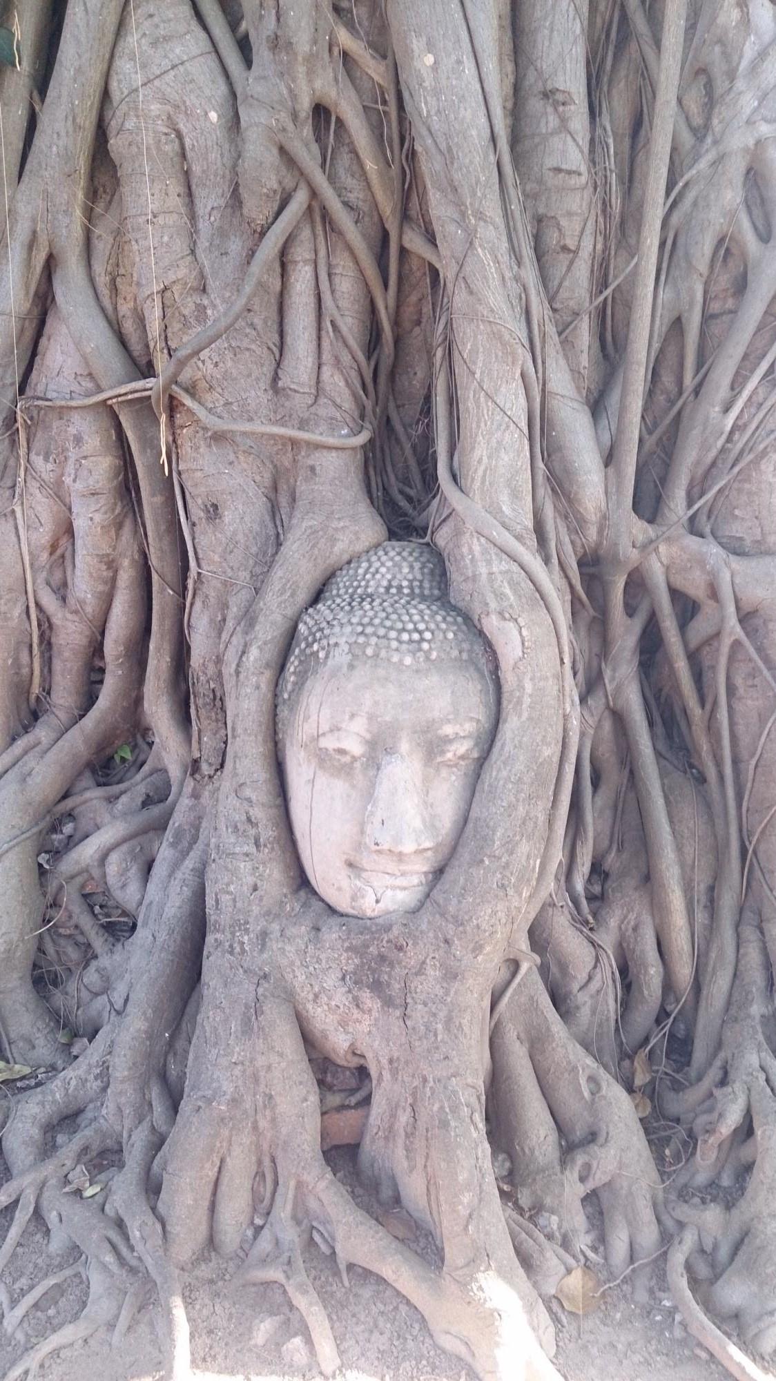 木に取り込まれた仏像